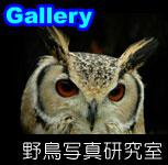 galleryzzz.jpg